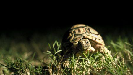 dark background, shell, turtle grass