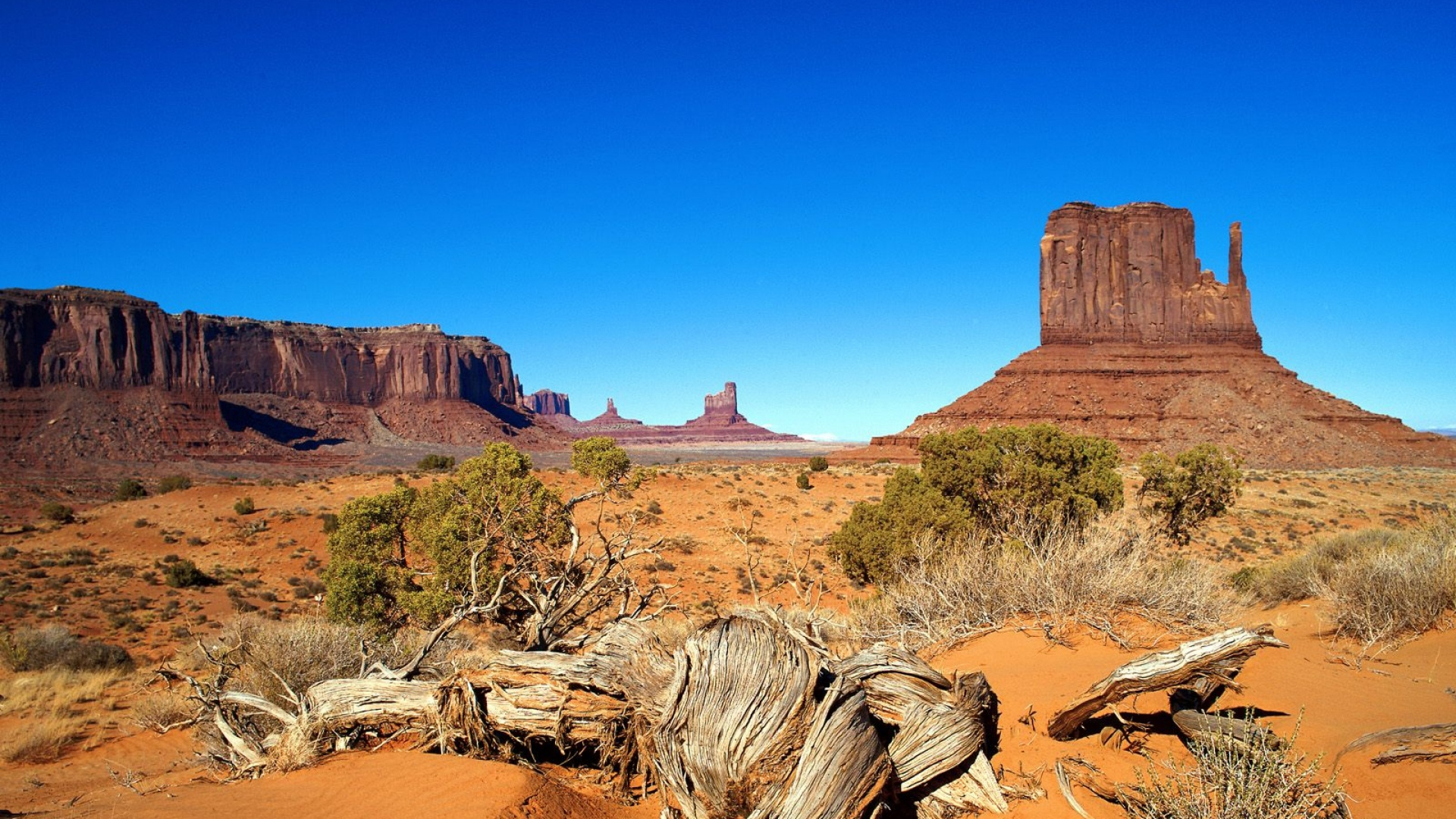 Microfungal oasis in an oligotrophic desert diversity