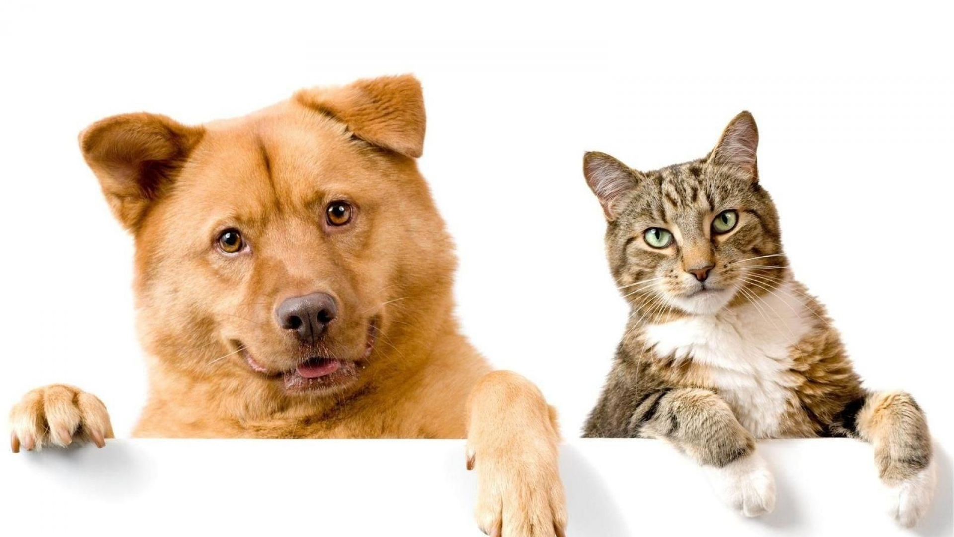 Grooming Dogs And Cats Games