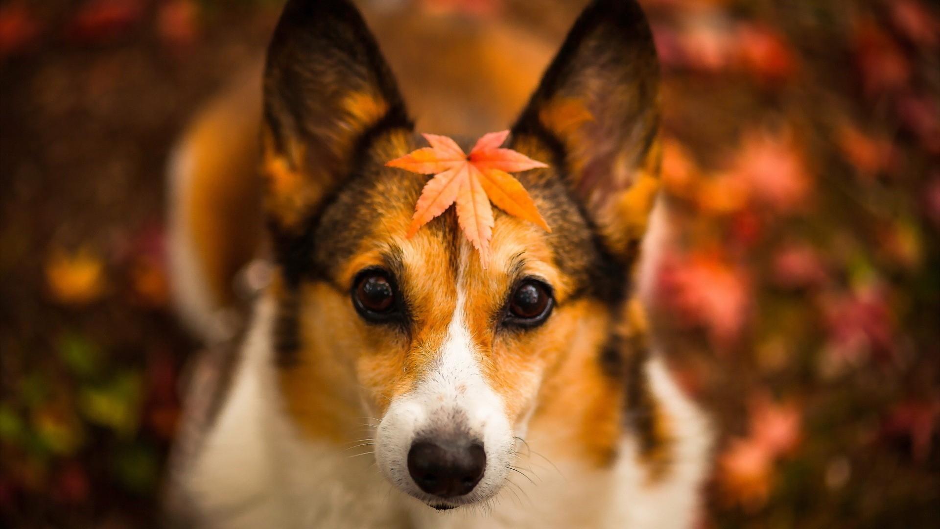 top autumn pet care tips