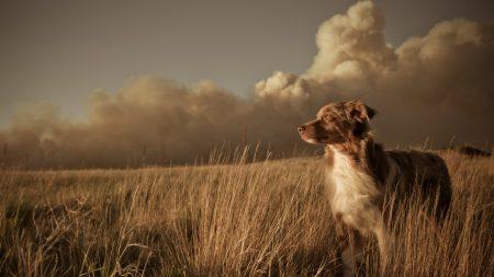 dog, field, grass