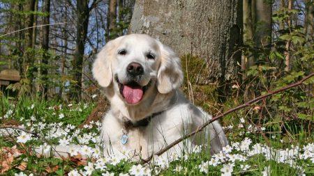 dog, forest, grass