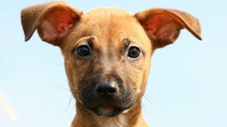 dog, little, face