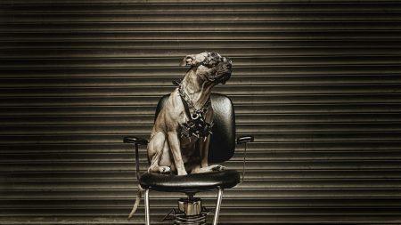 dog, metalist, chair