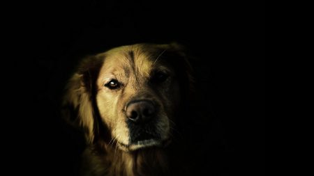 dogs, face, shadow