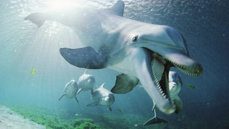 dolphin, underwater, swimming