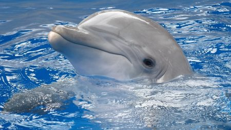 dolphin, water, swim