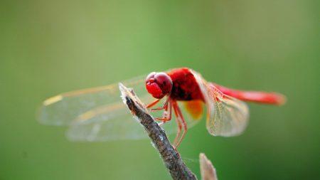 dragonfly, branch, sit