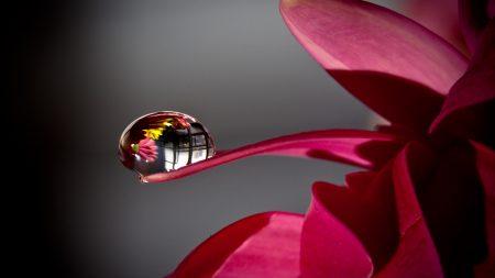 drop, dew, reflection