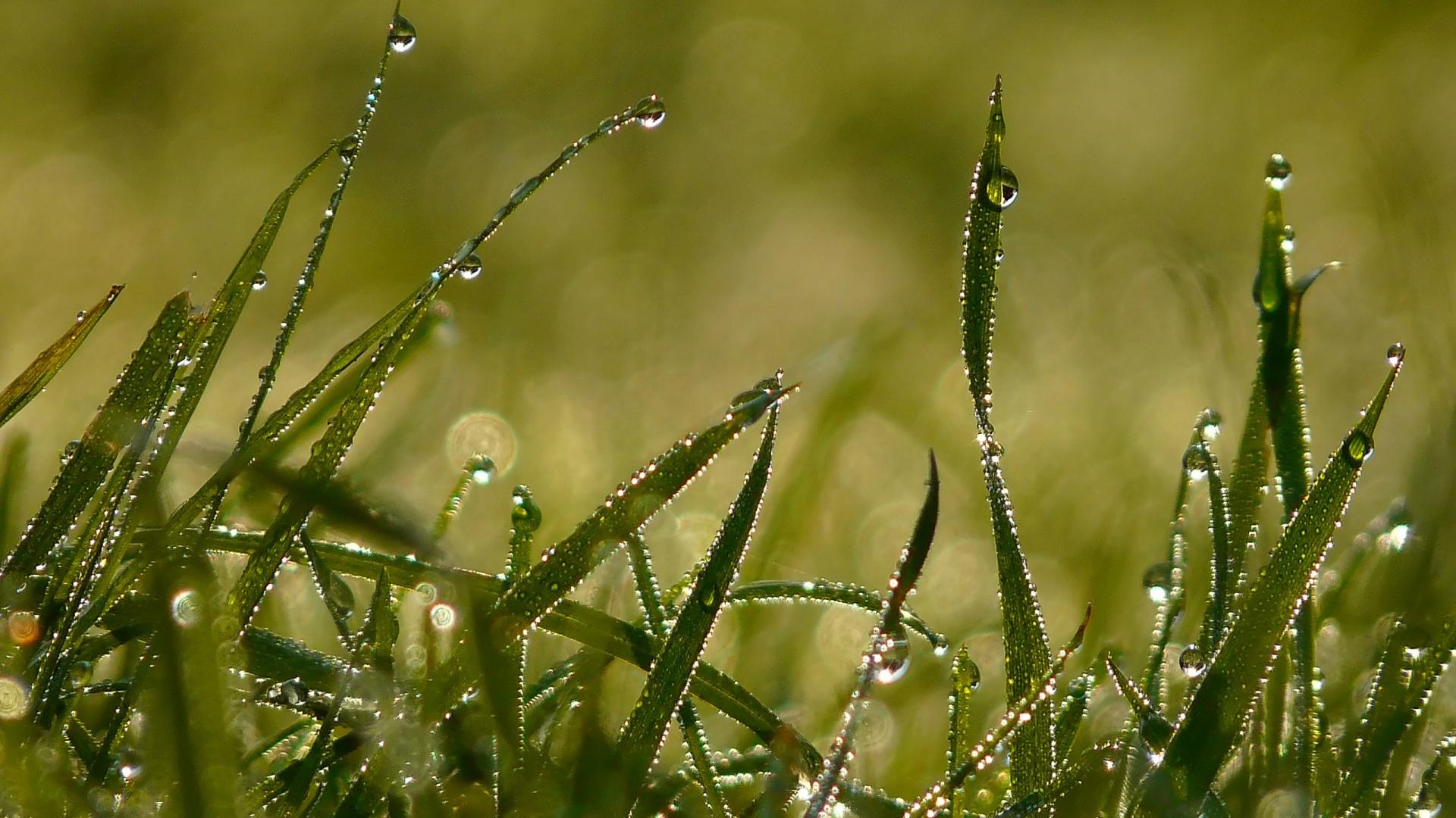 download wallpaper 1920x1080 drops, morning, dew, summer, grass