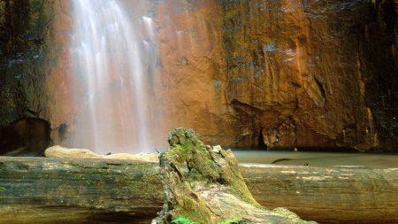 falls, logs, trees