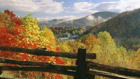 fence, logs, autumn