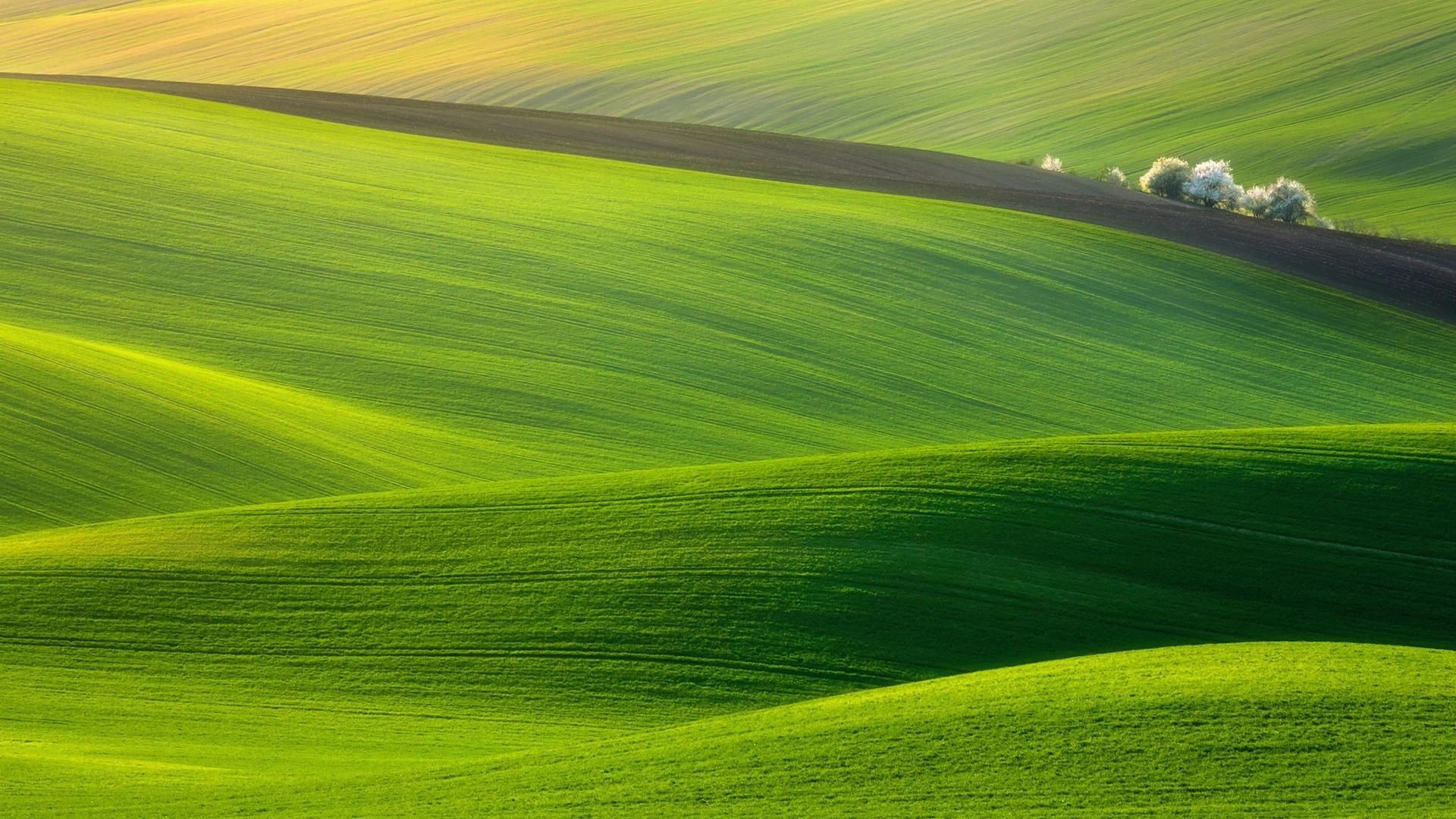 Download Wallpaper 1920x1080 Field Grass Sky Green Full Hd 1080p