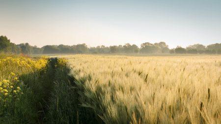field, summer, landscape