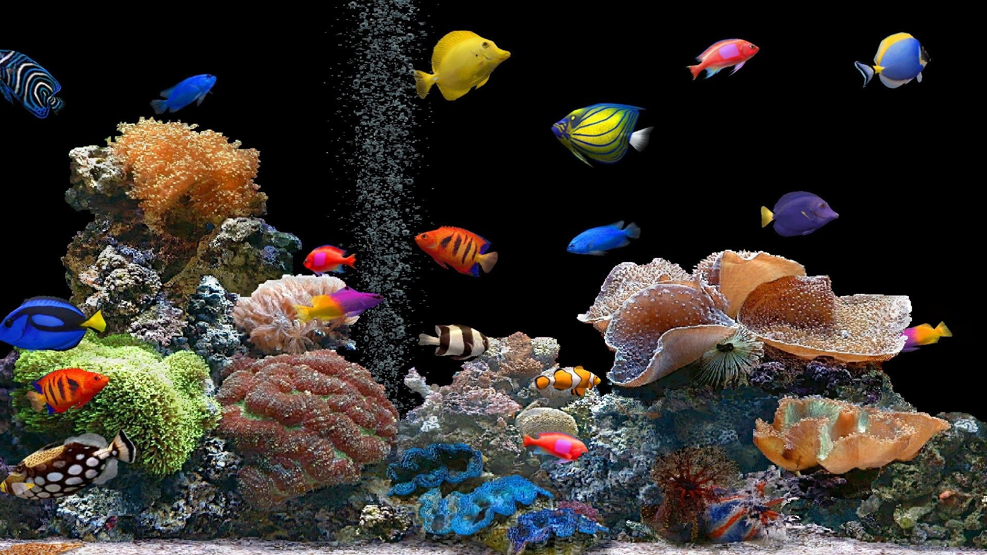 Download wallpaper 1920x1080 fish underwater colorful coral full fish underwater colorful freerunsca Gallery