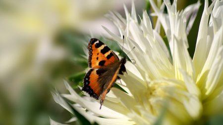 flower, butterfly, flight