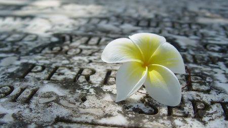 flower, white, surface