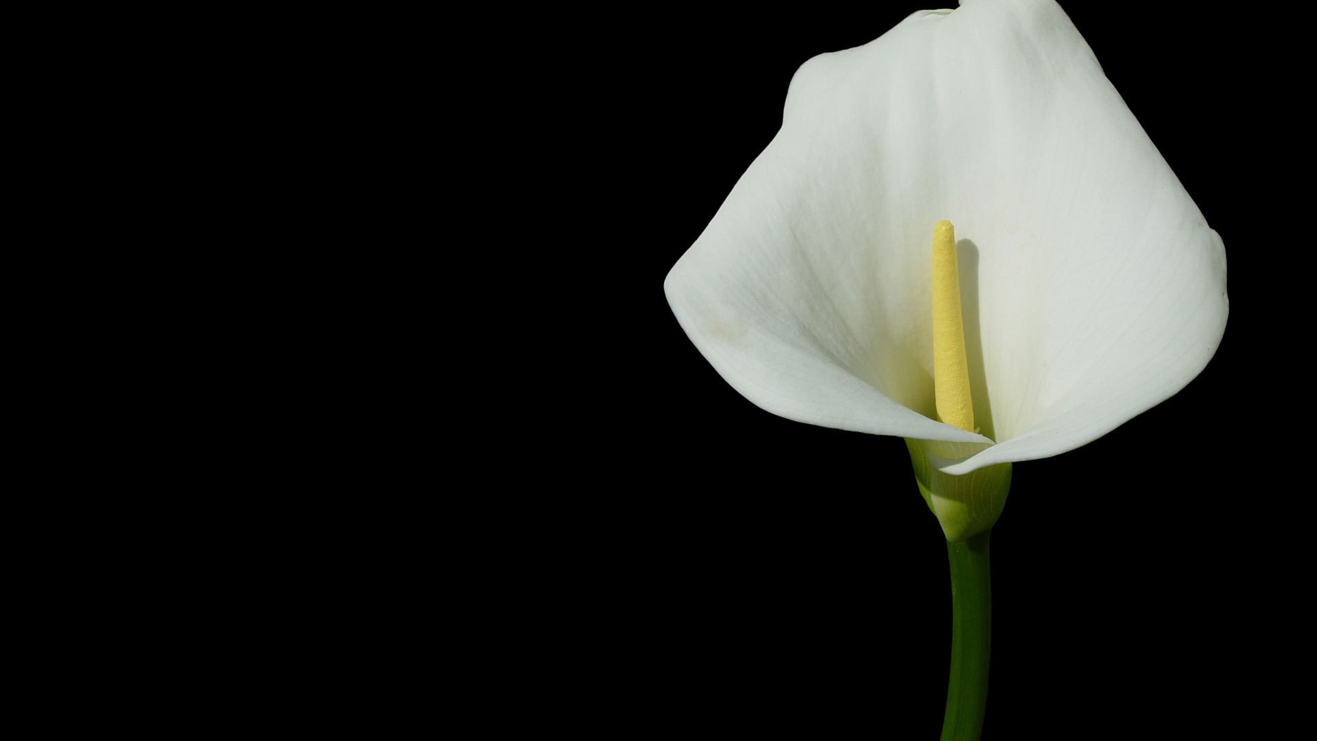 Download Wallpaper 1920x1080 Flower White Yellow Green Full Hd