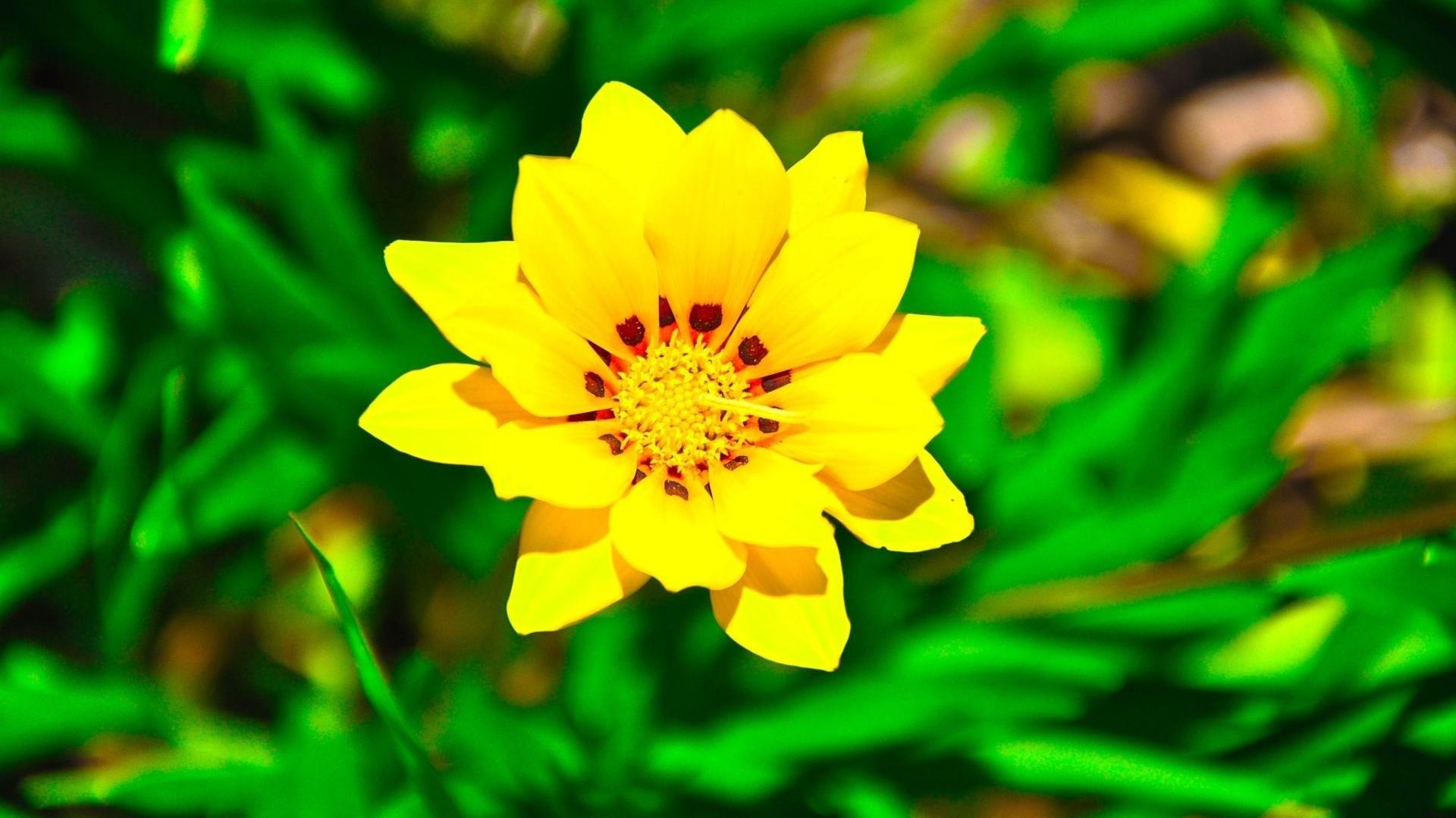 Download wallpaper 1920x1080 flower yellow green grass full hd flower yellow green mightylinksfo
