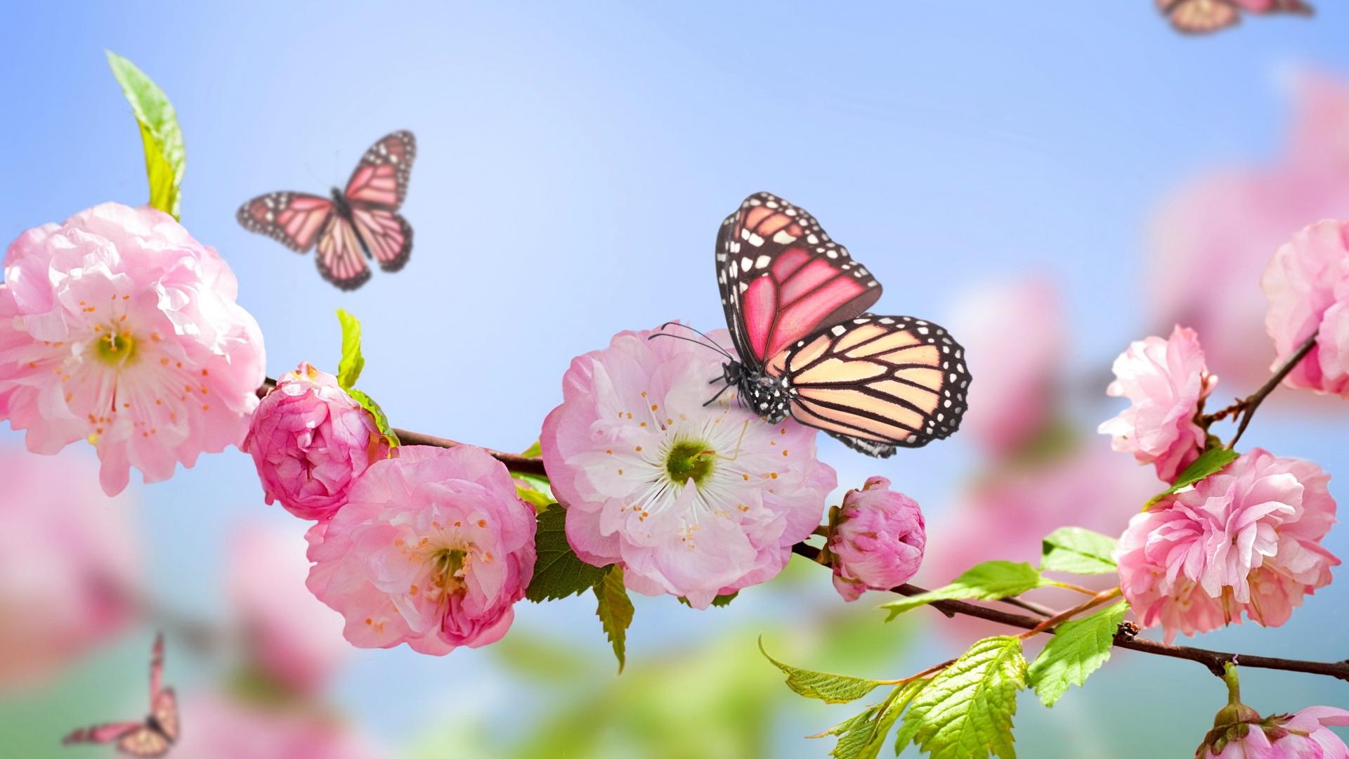 Simple Wallpaper Butterfly Spring - flowers_butterflies_spring_bloom_branch_96224_1920x1080  Photograph_265344.jpg