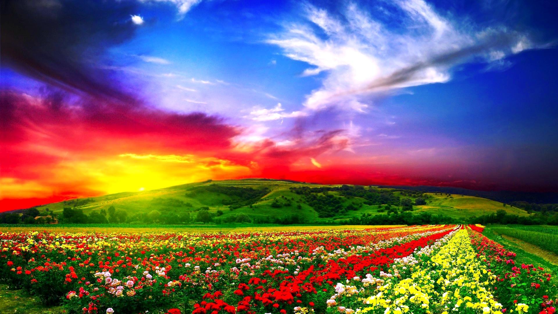 flowers field beautiful