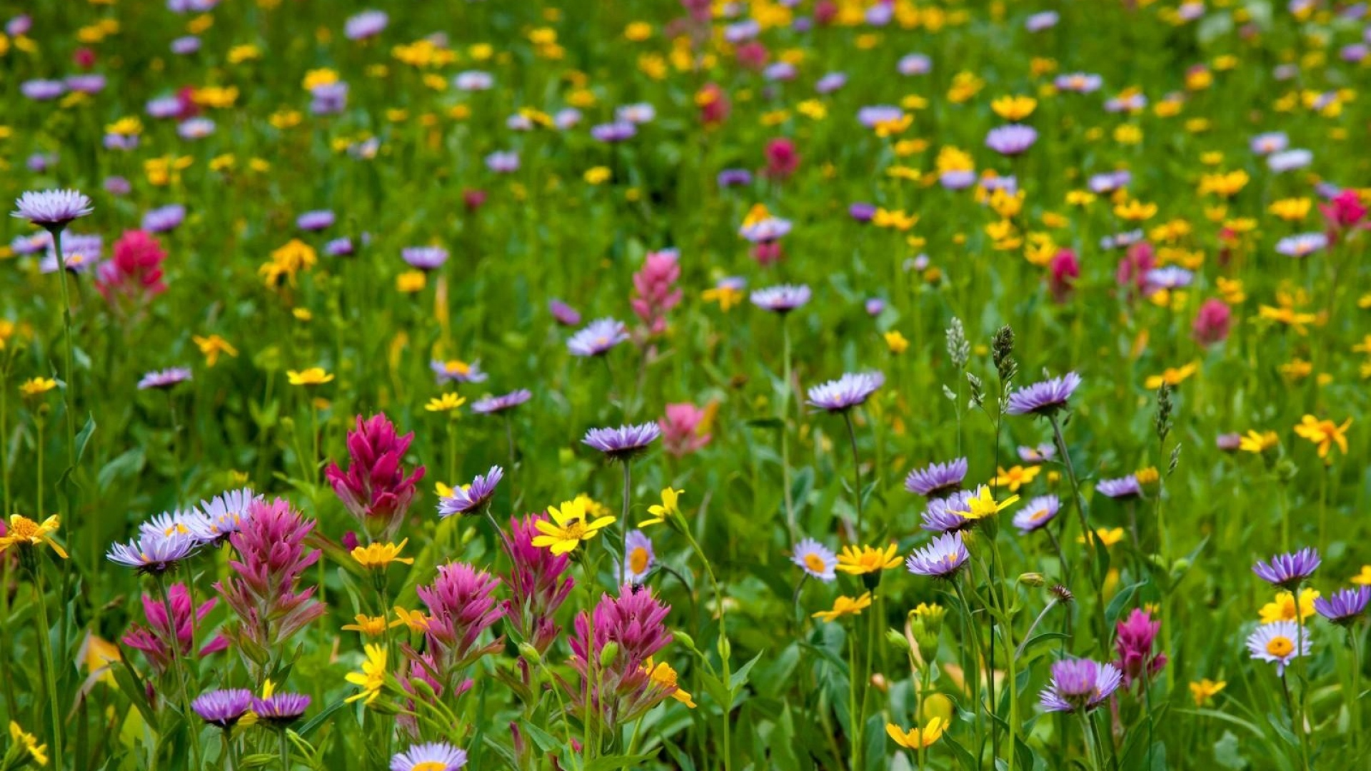 Фото цветы лугов