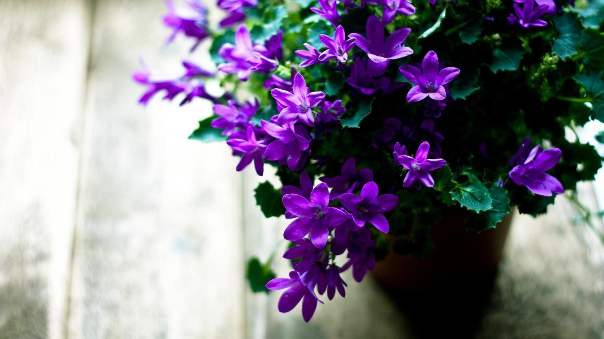 Цветы в горшках цветущие