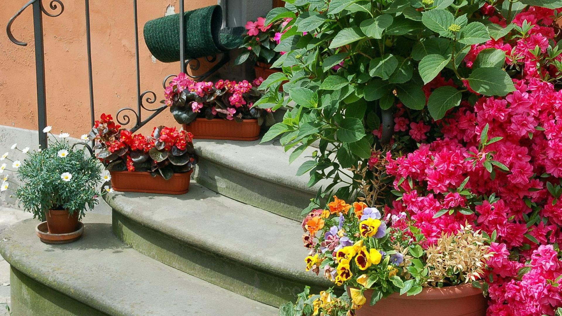 Download Wallpaper flowers pots herbs railings stairs