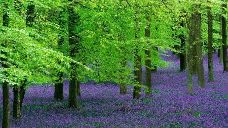 flowers, trees, wood