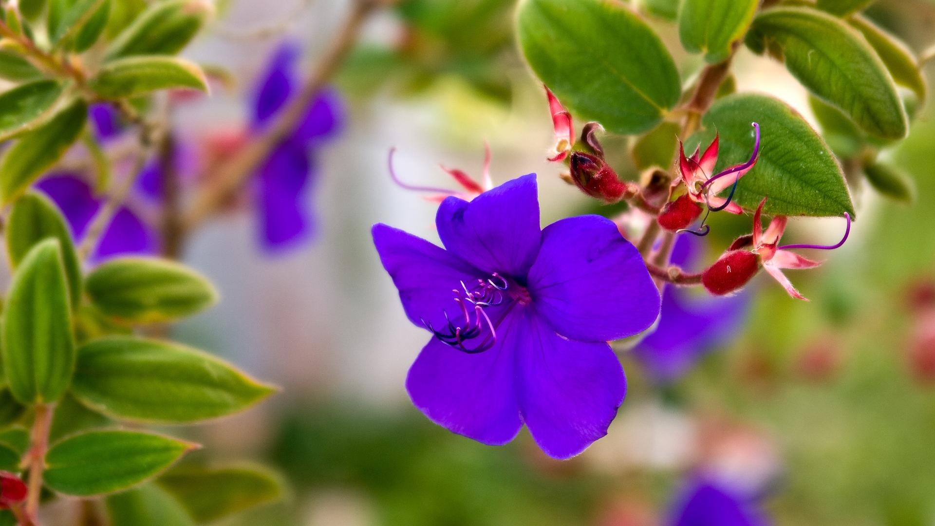 download wallpaper 1920x1080 flowers violets grass