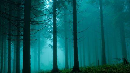 forest, building, fog