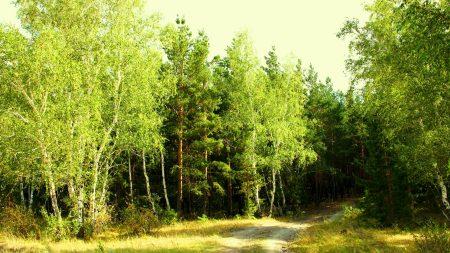 forest, landscape, summer