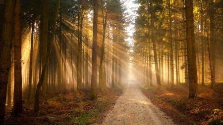 forest, sun, rays