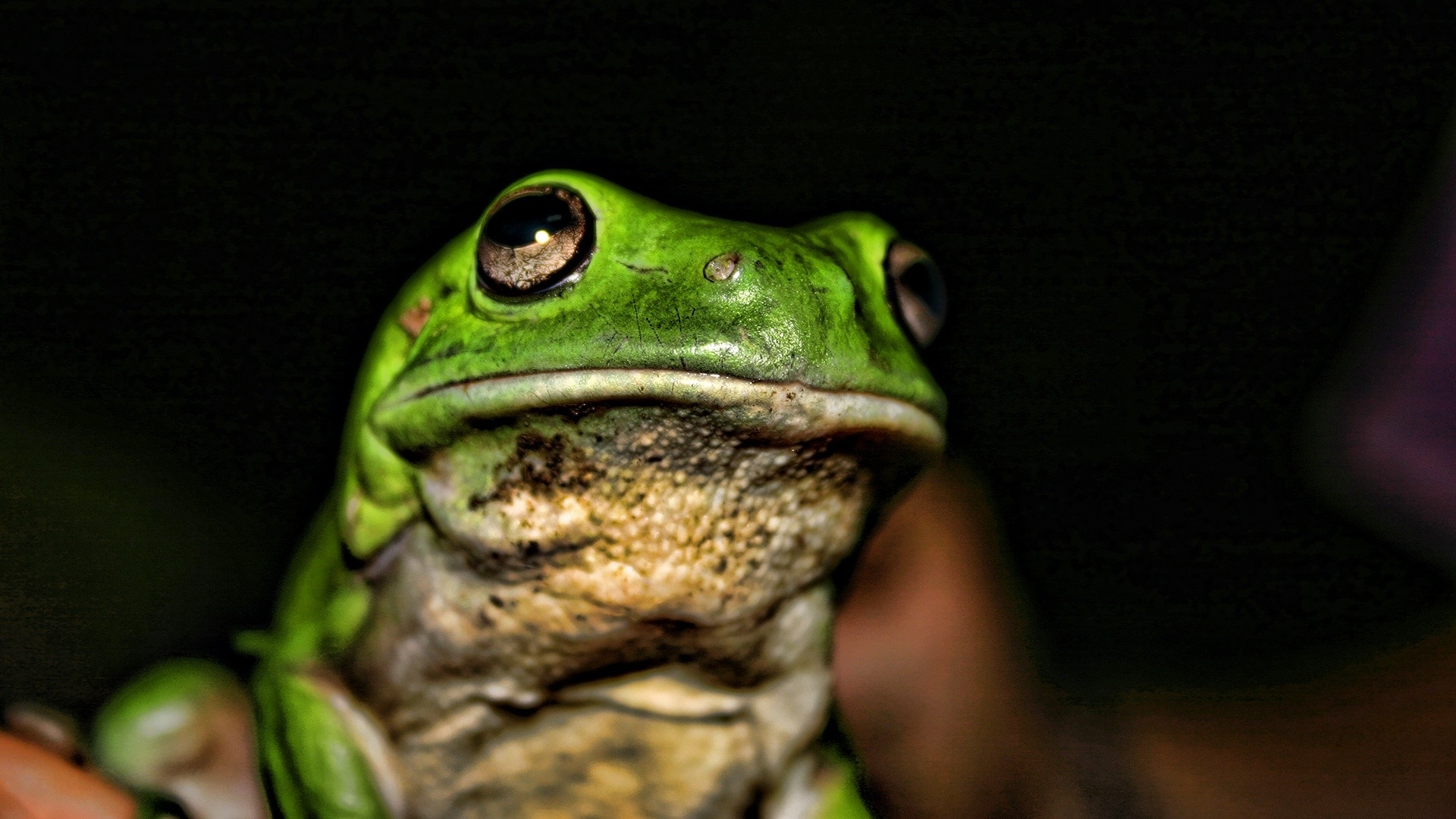 Earnings Disclaimer >> Download Wallpaper 1920x1080 frog, face, color, bright, shadow Full HD 1080p HD Background