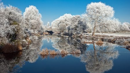 frost, trees, lake