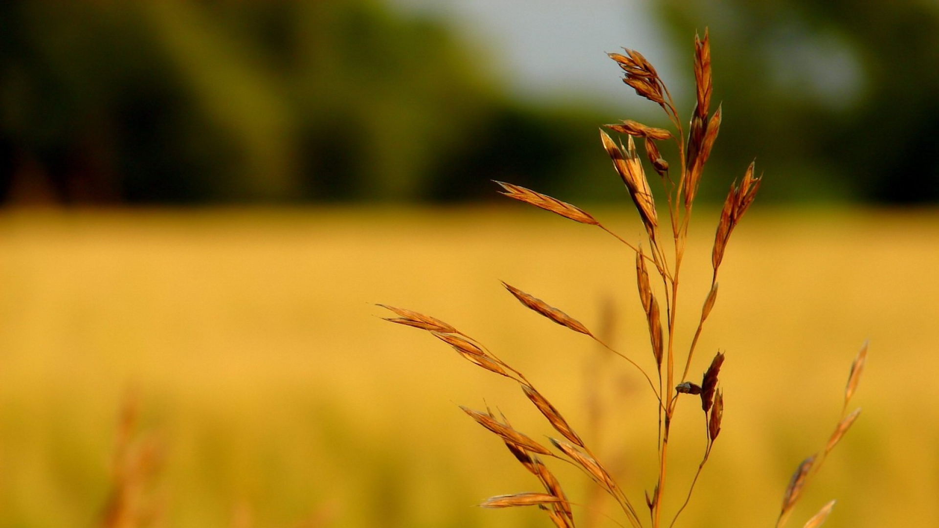 dry grass field background. Grass, Dry, Field Dry Grass Background A