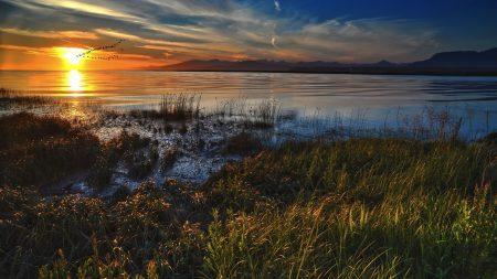 grass, faded, lake