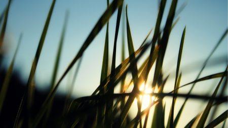 grass, field, sun