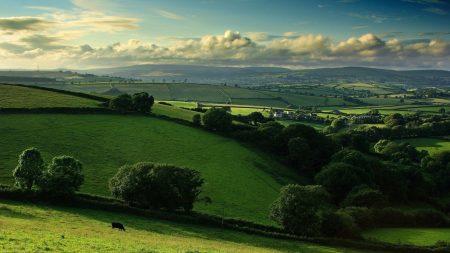 grass, sky, trees