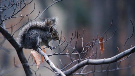gray, squirrel, sky