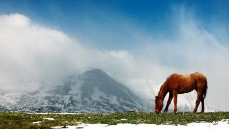 horse, mountains, snow