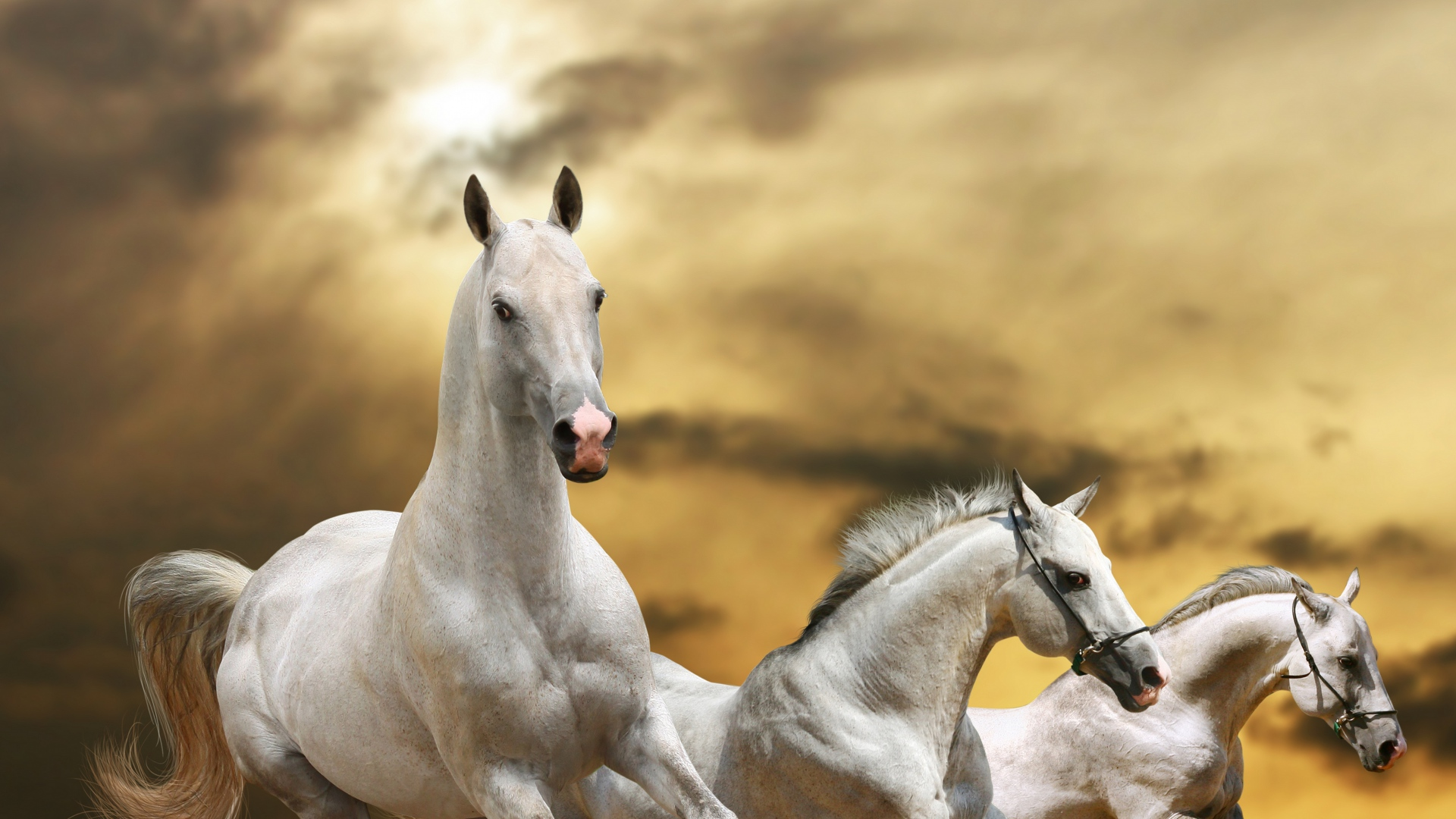 Fantastic Wallpaper Horse Rose - horse_race_freedom_grass_dust_sky_72807_1920x1080  You Should Have_59516.jpg