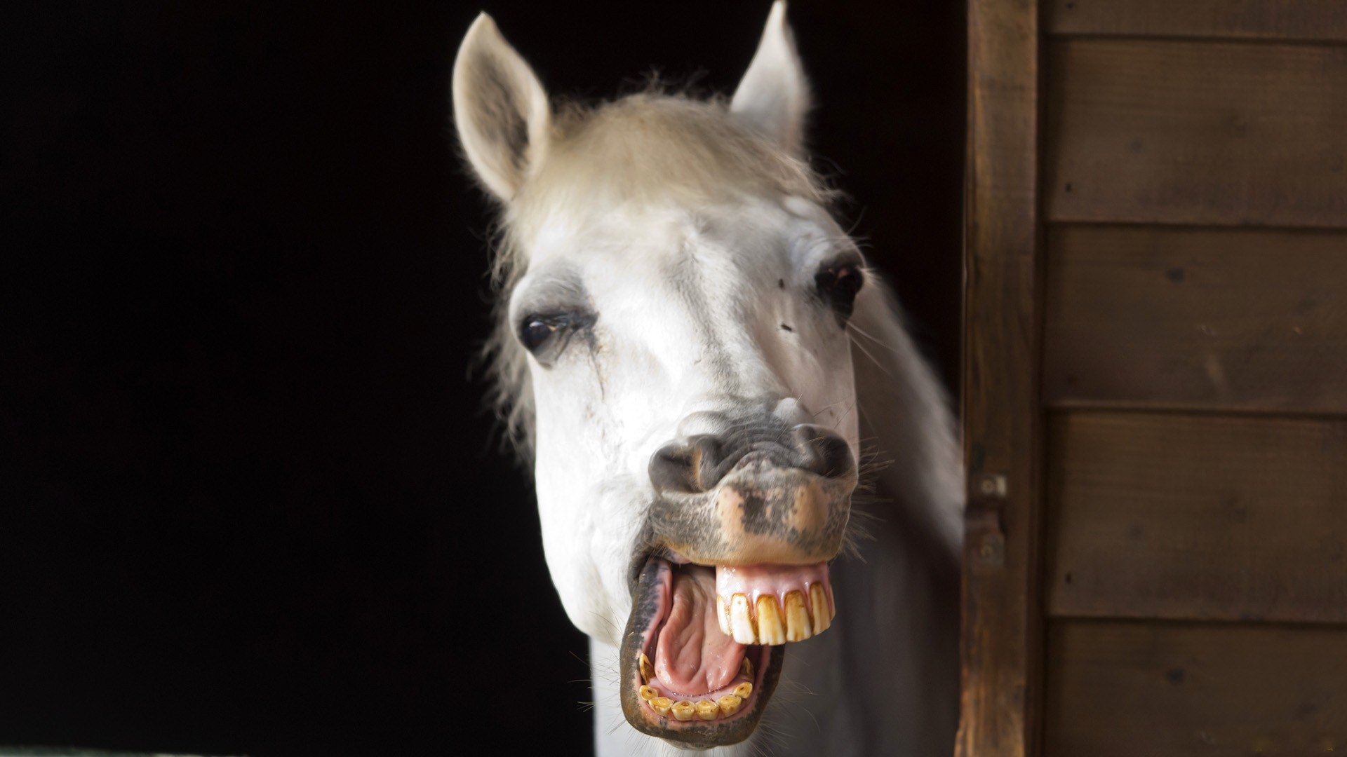 Image result for horse smile