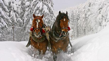 horse, snow, sled