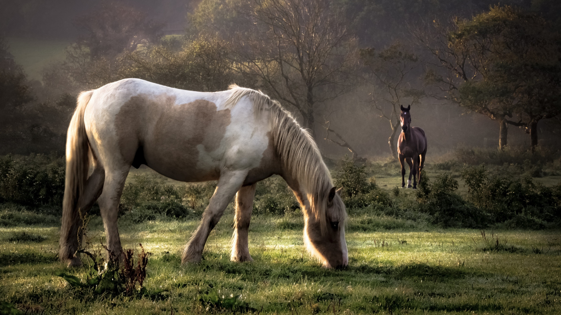 Great Wallpaper Horse Couple - horses_grass_couple_walking_eating_trees_59687_1920x1080  You Should Have_754815.jpg