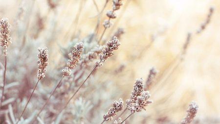 inflorescence, autumn, grass