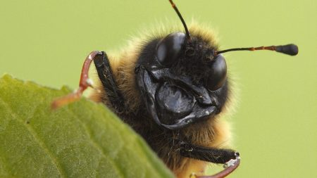 Download Wallpaper 1920x1080 macro, insect, antennae, surface Full ...