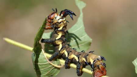 insects, leaves, crawl