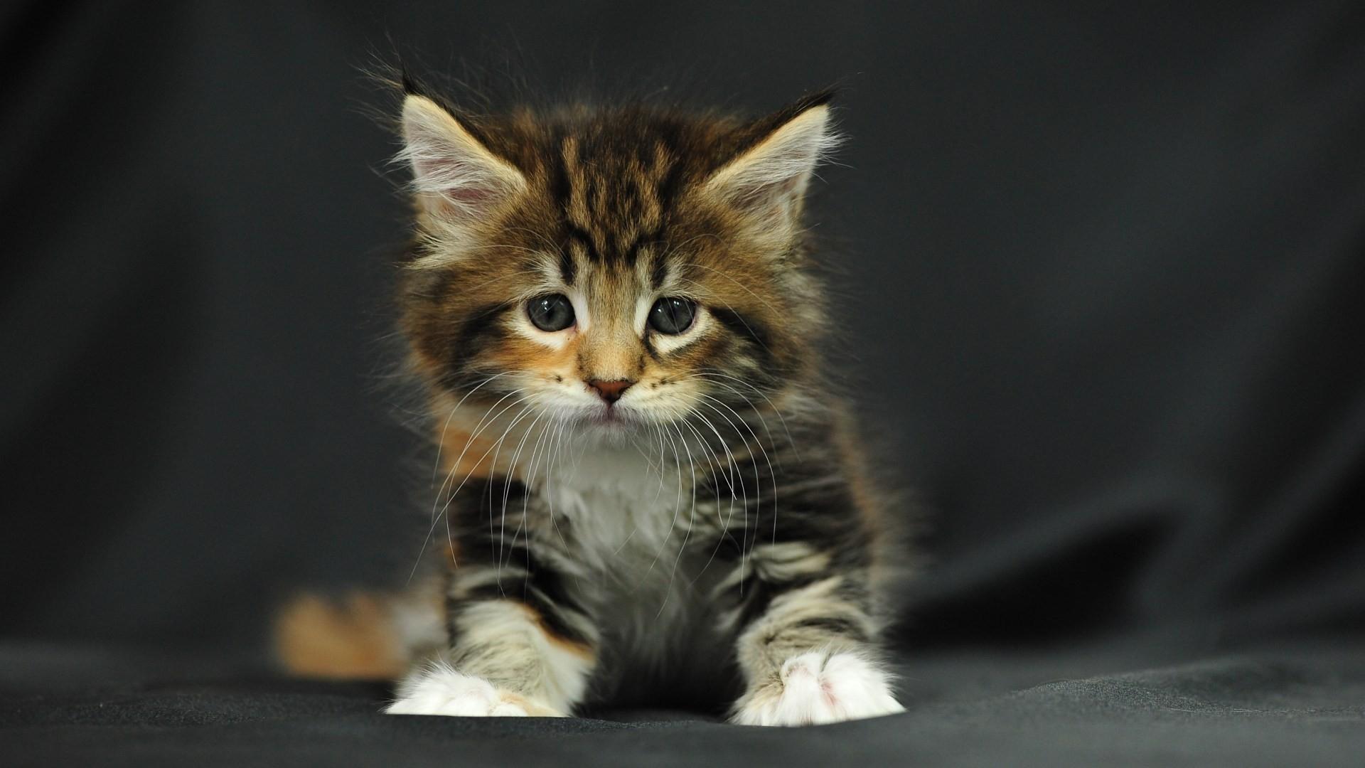 Download Wallpaper kitten baby black background