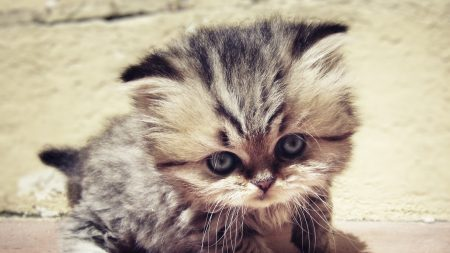 how to get a kitten to stop crying